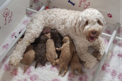 moeder met de puppies