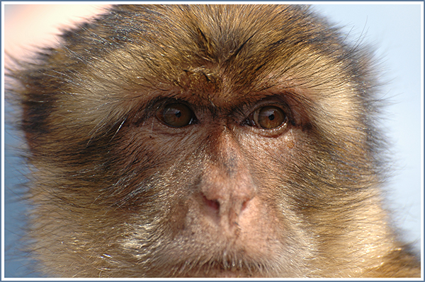 close up Monkey